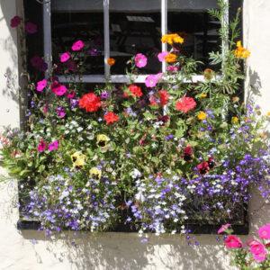 Балконная Цветочная смесь