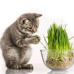Трава для кошек «Кис-кис-мяу»