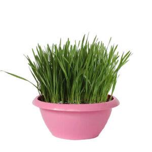 Трава для кошек (смесь)