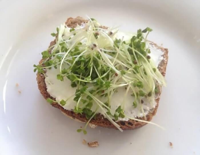 блюда с ростками микрозелени