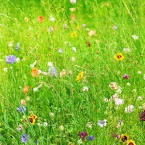 Цветочная смесь Садовый Помощник